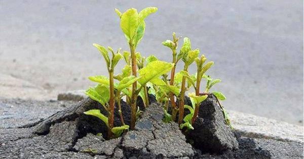 从植物身上得到的启示