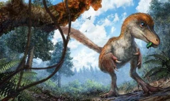 中國發現9900萬年前恐龍尾,侏羅紀世界不是夢?