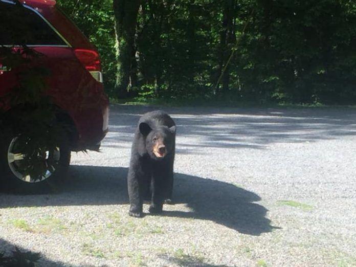 居然有熊熊集團出沒偷車!光明正大「搖頭晃腦看鏡頭」…網笑翻:熊熊版俠盜列車手?