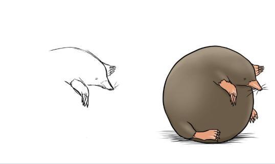 中途放棄不可恥!插畫家「畫完頭就擺爛」半途而廢系動物一夕爆紅…看到暴龍笑翻